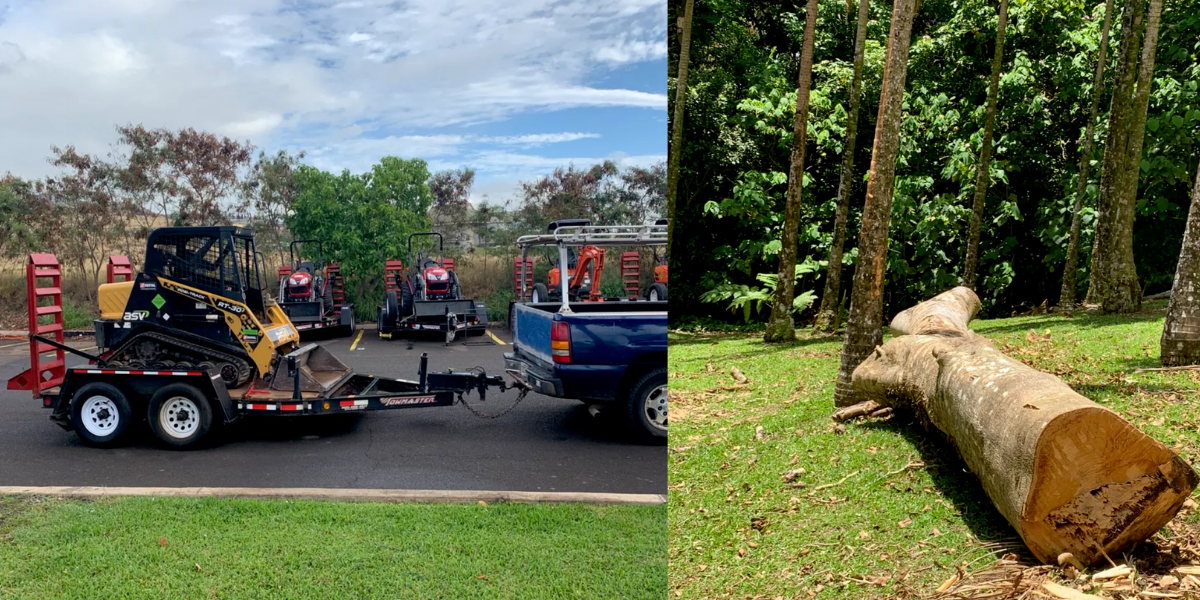 oahu tree removal