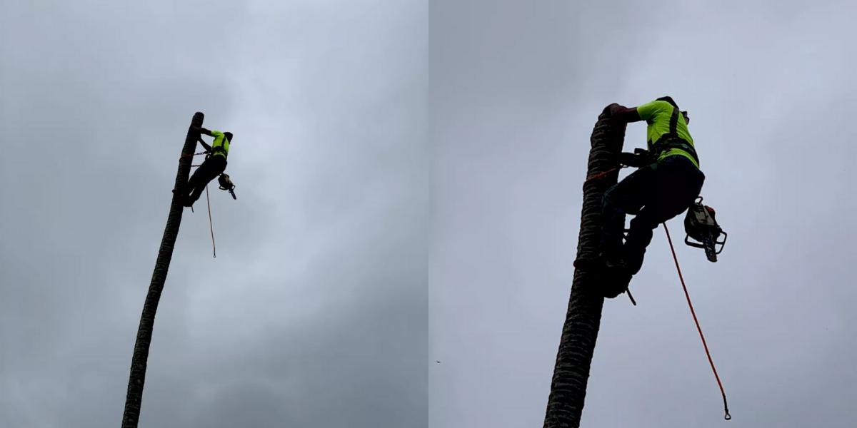 tree trimming oahu